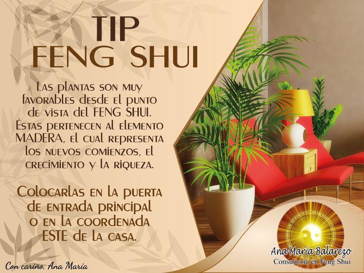#TipFengShui: no olvides colocar las plantas en la puerta de entrada principal o en la coordenada ESTE de la casa. #fengshuiencasa