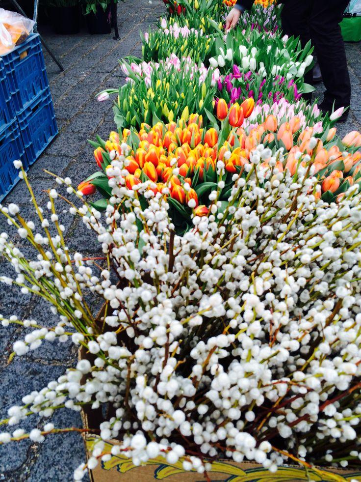Tulipany atd.
