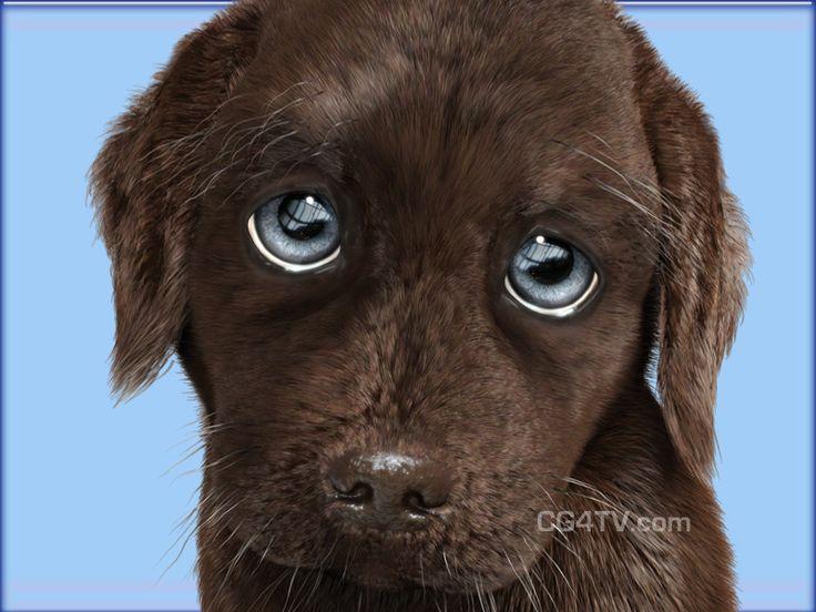 chocolate lab puppies | 3D chocolate-colored Labrador ...