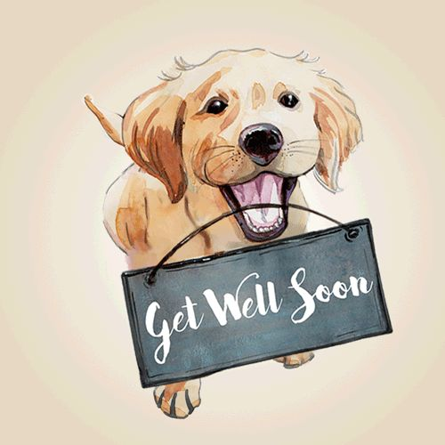 Feel Well Soon Messages: 80 Best Get Well (Gifs) Images On Pinterest