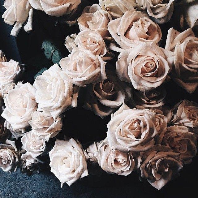 the prettiest blush
