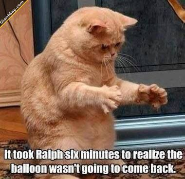 Comic pussy, cat humour. For the funniest kittens images and quotes check out www.funnyjoke.lol
