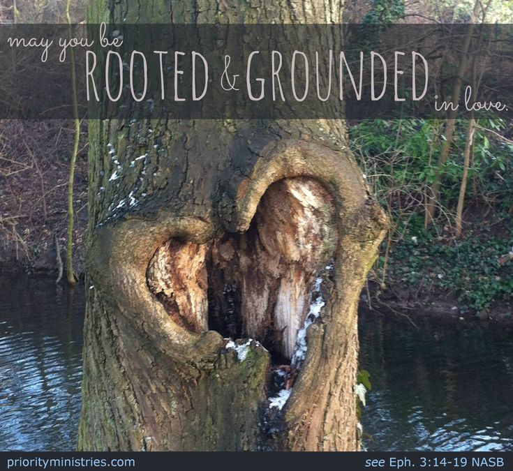 May you be rooted and grounded in love! Ephesians 3:14-19