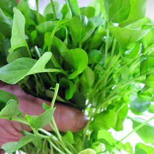 Watercress | 13 Weeds You Can Eat Without r-- Peppery flavor. good in salad and sandwiches, without cooking.