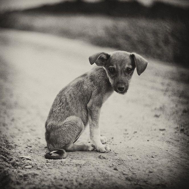 грустные картинки бездомных животных до слез клеем вас вряд