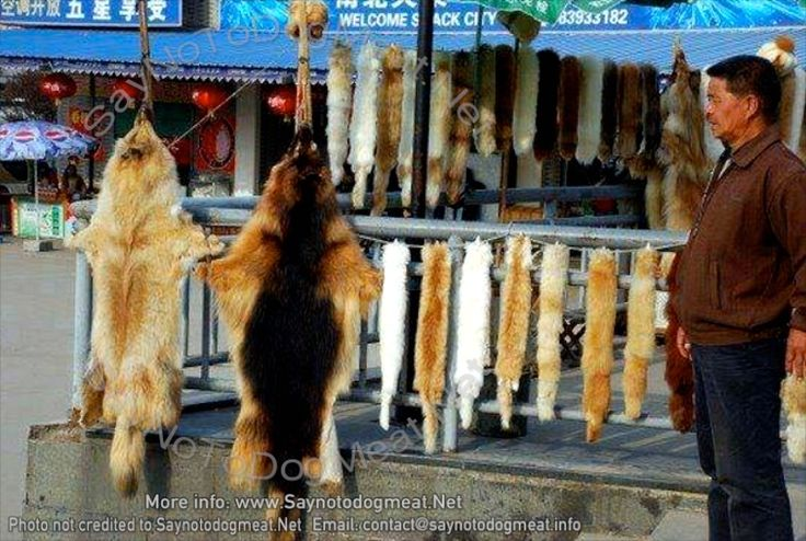 Canada: Fur Trims Sold, Linked To China's Dog Meat Trade A dog pelt mattress cover or cat fur car-seat-covers are considered to be must have items for some Chinese residents. China's pet meat and f...