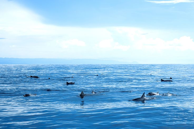 #PamilacanIsland, this breathtaking island is the home of dolphins. They often jumping out of the water and doing somersaults. They travel in small and large groups, most often following the wake of passing boats. #Odyssey #Tour #Holiday #Vacation #Philippines #Beach #Sea #Island #BoholIsland #Nature #Beautiful #Scenery