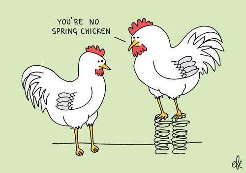 Jokes About Chickens: 1000+ Images About Too Punny On Pinterest