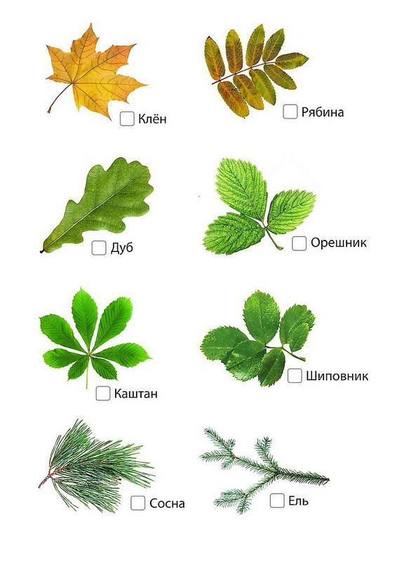 КНИЖНЫЙ ШКАП Катерины Таберко - Осенние игры на улице
