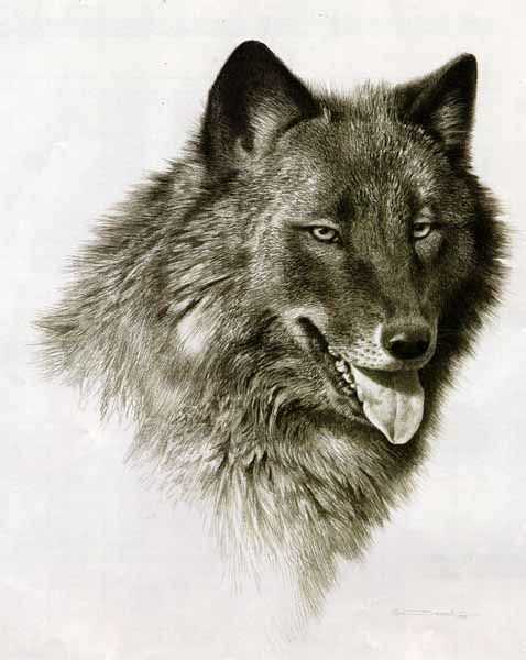 Carl Brenders Black Wolf
