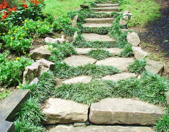 10  images about dwarf mondo grass lanscaping on pinterest