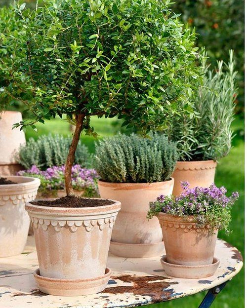 We just love grouping aged terracotta pots together on an outdoor table for a great outdoor statement