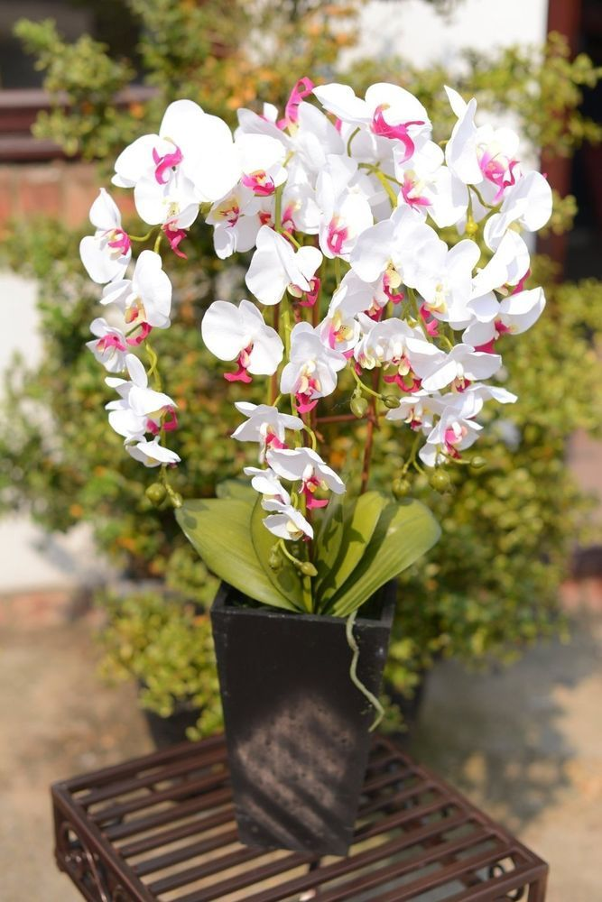 Large Artificial Orchid Plant in a Tall Black Pot White and Pink Flowers #UKGardens