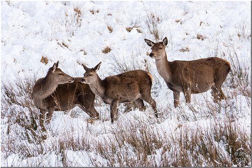 BBC Winterwatch | Flickr - Photo Sharing!