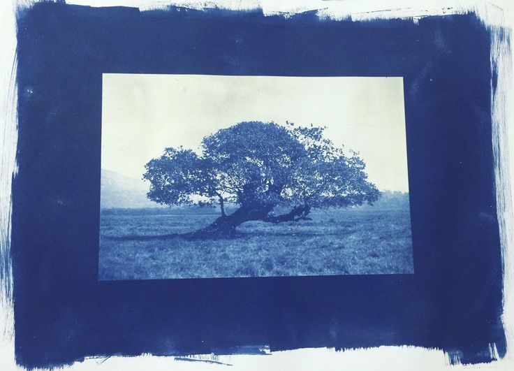 Tree of Life Artwork by Jagrut Raval. A cyanotype print - an old photographic process from 1840 during the inception of photography, made with two chemicals ferric ammonium citrate and potassium ferricyanide to give the prussian blue colour to the print.