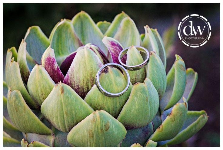 Wedding rings at South Farm, Cambridgeshire