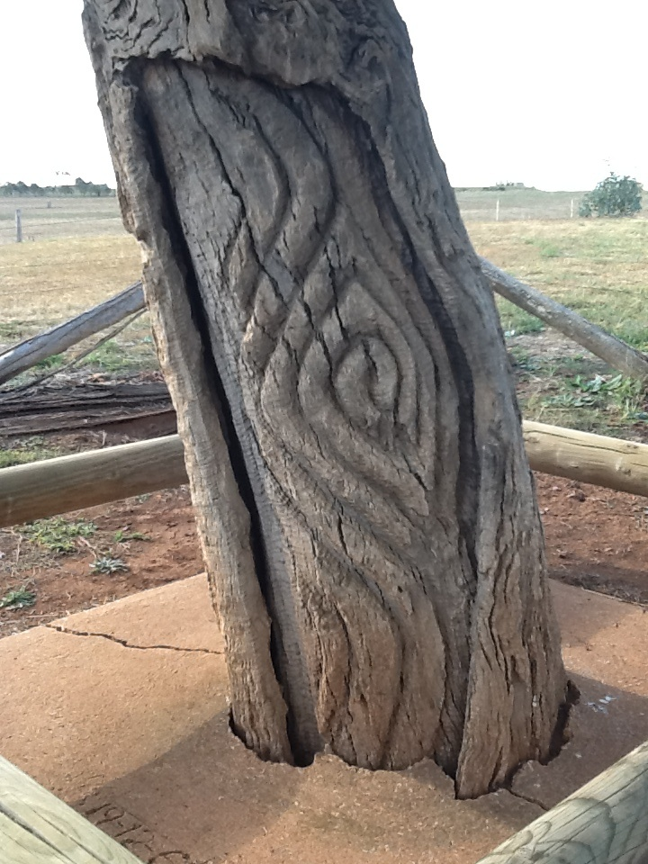 Yuranigh's grave near Molong. Carved grave trees