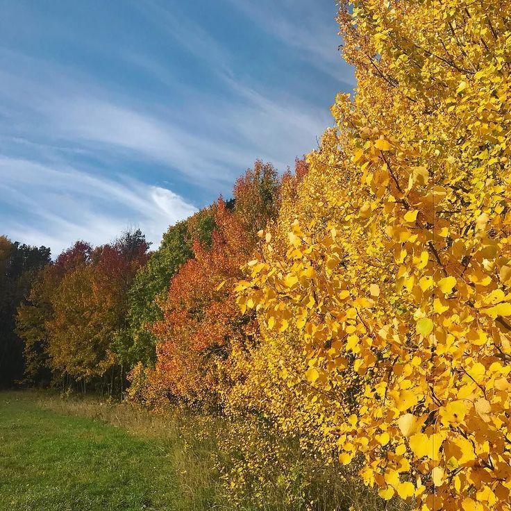 #oregon #pnw #upperleftusa #oregonexplored #fall #autumn #wanderlust #nature #leaves #bestoforegon #usa #portland #pnwonderland #pdx #colors #colours #colorful #summer #red #yellow #exploreoregon #traveloregon #oregonnw #orange #fallcolors #autumnleaves #theweekoninstagram #cascadiaexplored #spb #saintpetersburg