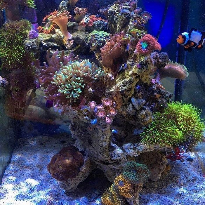 Can't stop #Polyplab #ReefPro @new0cean....