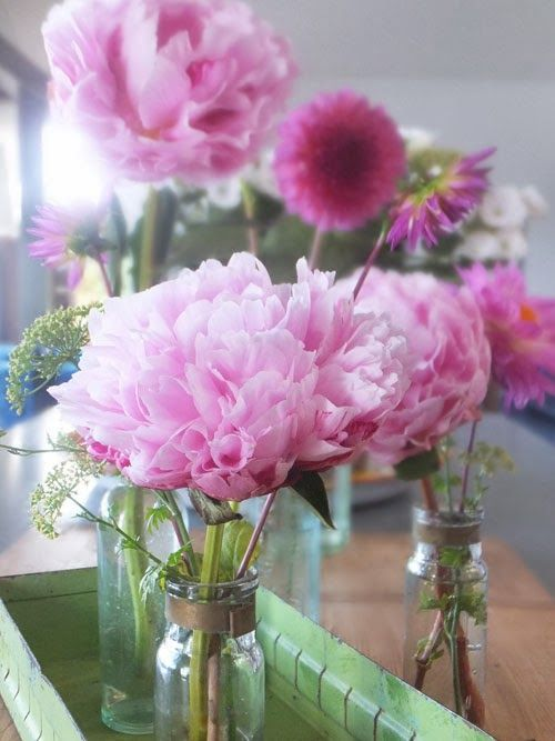 #peonies Small Acorns: florabundant moments