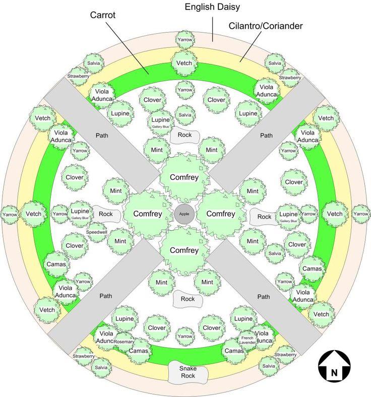 Apple Guild: Under-plantings for apple trees | Garden-my ...