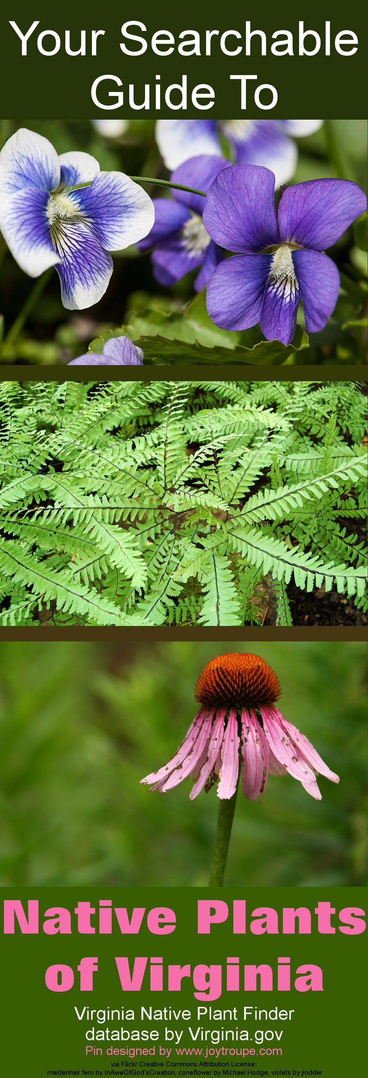 Virginia Native Plants Database  http://www.dcr.virginia.gov/natural_heritage/np.shtml  #garden #virginia  Plant images used under Creative Commons Attribution License: http://creativecommons.org/licenses/by/2.0/
