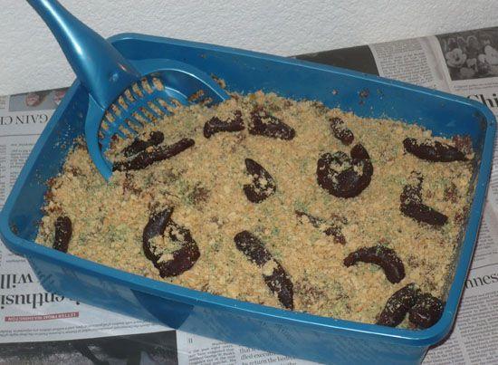 Spooky Halloween Treats Iii Cat Kitty Litter Box Cake