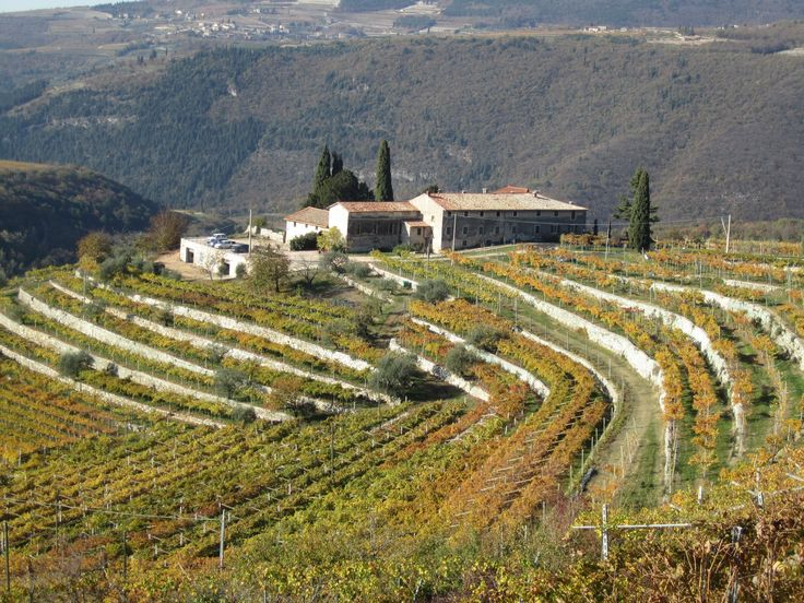 Valpolicella, our winery