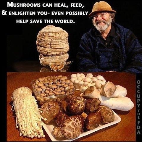"""""""Mushrooms can heal, feed and enlighten you - even possibly help save the world."""" ~ Dr. Paul Stamets"""