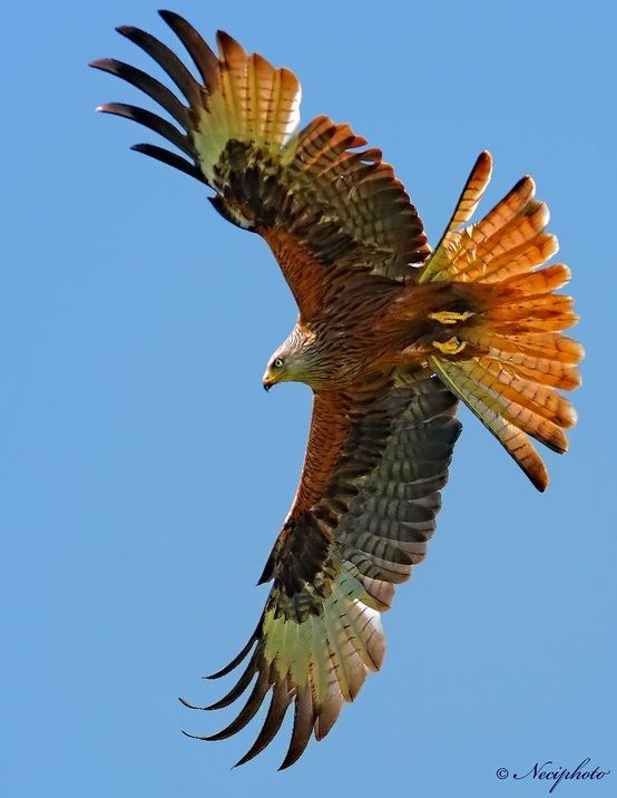 The hawk is the messenger of the spirit world;  Strong connection with spirit, increased spiritual awareness.                    Hawk spirit animals belong to the realm of bird medicine. It carries the symbolism that comes with the ability to fly and reach the skies.