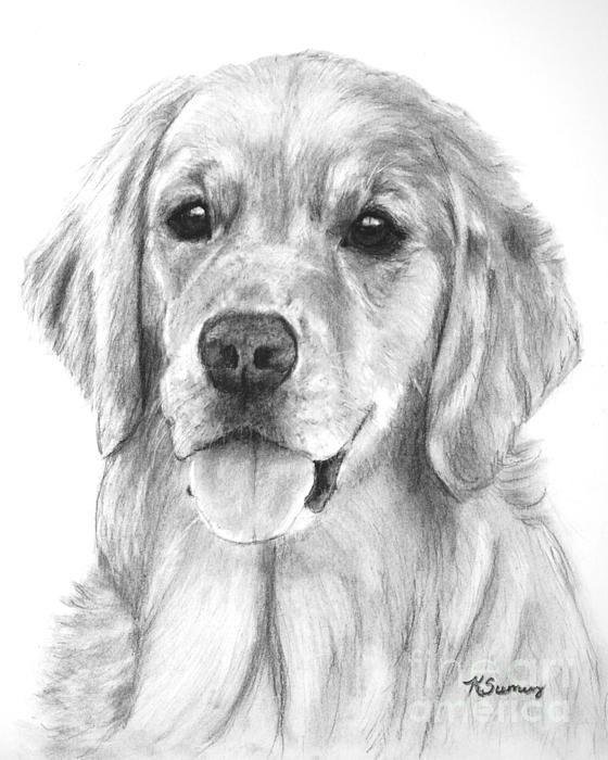 Golden retriever art on Pinterest | Golden Retrievers, Dog Art and ...