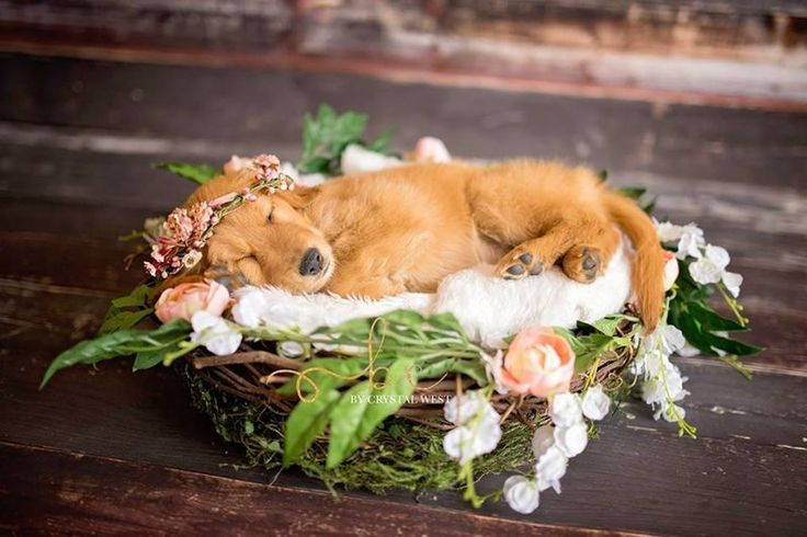 All Puppies Should Have Newborn Photoshoots, Not Just This One