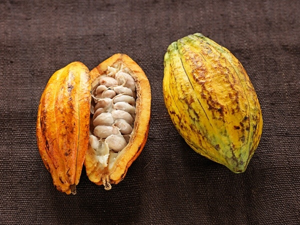 cocoa beans - something that will turn into a very delicious chocolate