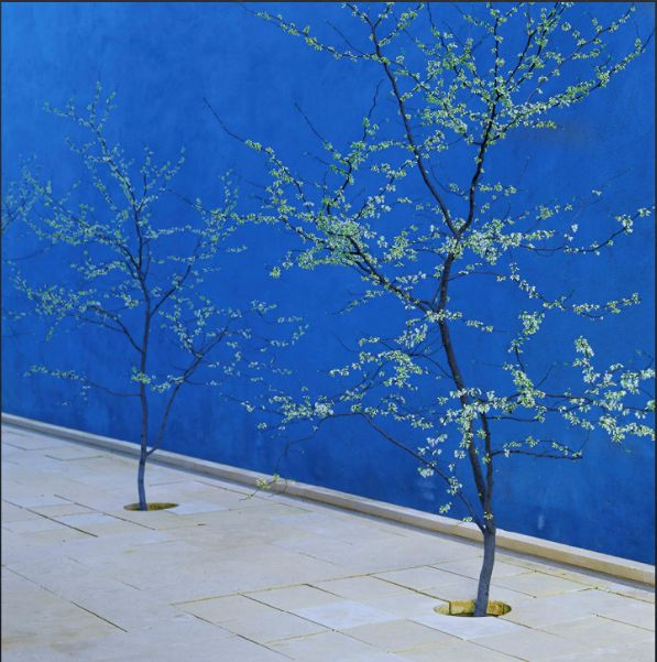 Love this colour blue for the garden walls. (house can be off-white)