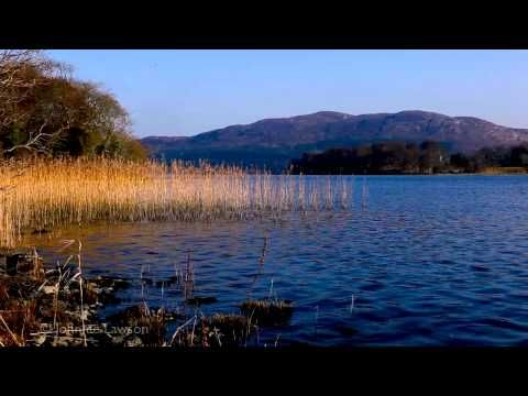 Nature Sounds-8 Hour Relaxation-Birds Singing-Sound of Gentle Lake Waves Meditation - YouTube