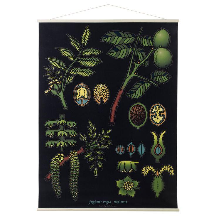Постер гербарий икеа