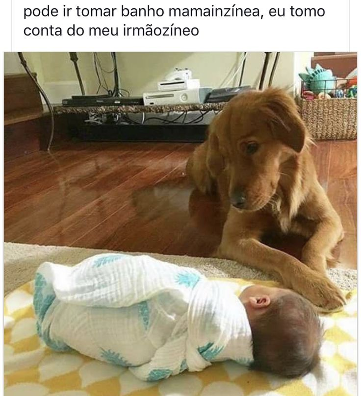 #petmeupet #amoanimais #cachorro #maedecachorro #paidecachorro #filhode4patas