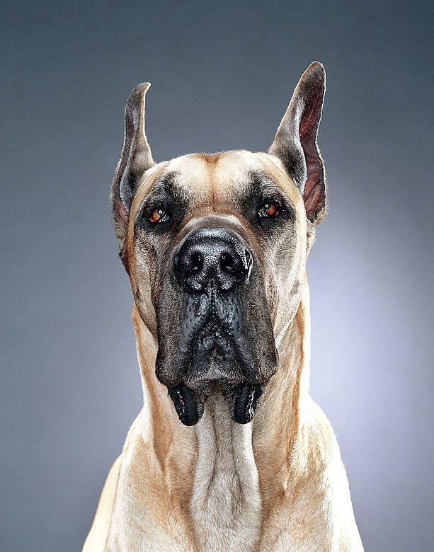 Dogs by Jill Greenberg