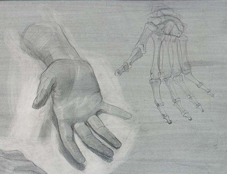анатомический рисунок, автор Долгая Ольга (Dolgaya Olga),РАЖВиЗ, 2-й курс,бумага карандаш,1996 г.