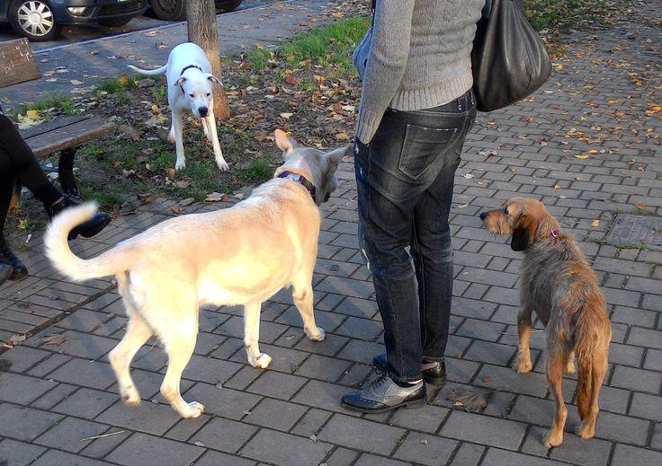 15/11/2015 - Torino con Aria e Liu