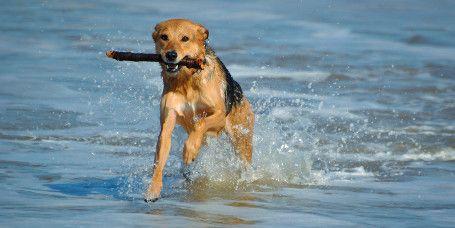 FKK-Strand auf Norderney:  Genießen Sie Ihre Freiheit auf Norderney: Unverhülltes Badestrand-Erlebnis garantiert der FKK-Strand auf Norderney. Eine Strandsauna bietet Wellness der besonderen Art mit Panoramablick auf die Nordsee. Übrigens: Auch am FKK-Strand sind Hunde herzlich willkommen!