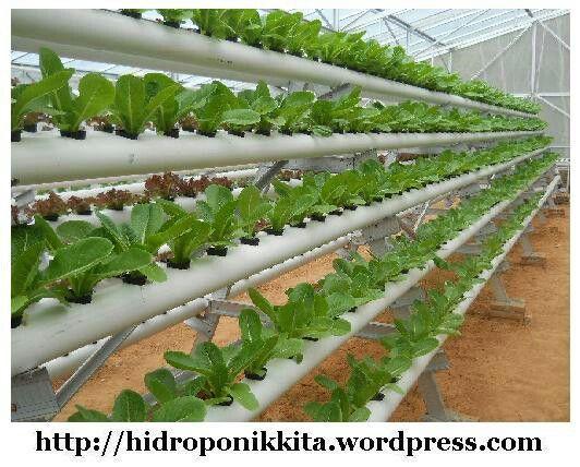 YJA-ERfarm Konsultan Agrobisnis sistem Hidroponik, Aeroponik dan jasa rancang bangun kebun. Telp.    : 0878-2539-0841 Pin BB. : 758F3C6C Email.  : yusufjayaabadi@gmail.com