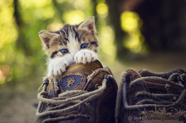 Beccato! Ecco chi si nasconde nelle scarpe di papà! Il mio gattino.