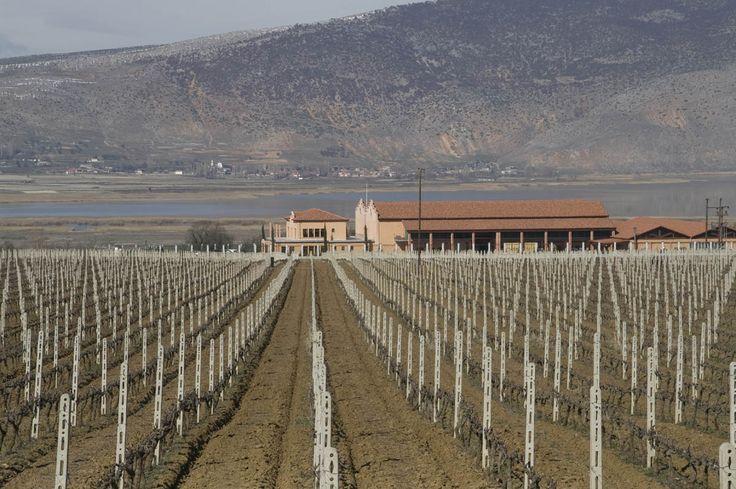 Alpha Estate, Amyndeo, Florina, Winery