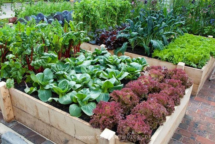 ВедаМост: Смешанные, или уплотненные посевы