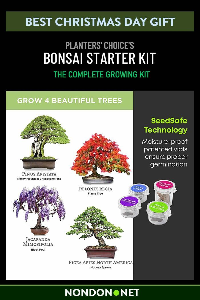 Bonsai Starter Kit The Complete Growing Kit To Easily Grow 4 Bonsai Trees From Seed Comprehensive Guid In 2020 Bonsai Tree Bonsai Tree Types Unusual Gardening Gifts