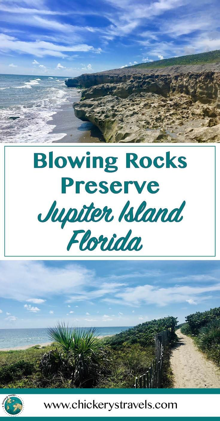Florida's Best Kept Secret: Blowing Rocks Preserve! This hidden gem in Florida provides miles of unspoiled limestone cliffs and sandy beaches. Enter through a sea grape tunnel to the white sand beach of Blowing Rocks Preserve.