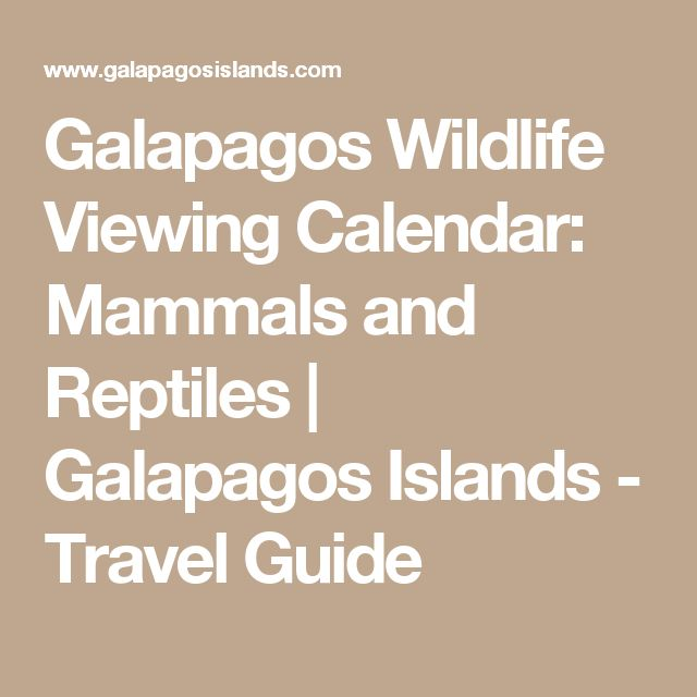 Galapagos Wildlife Viewing Calendar: Mammals and Reptiles | Galapagos Islands - Travel Guide