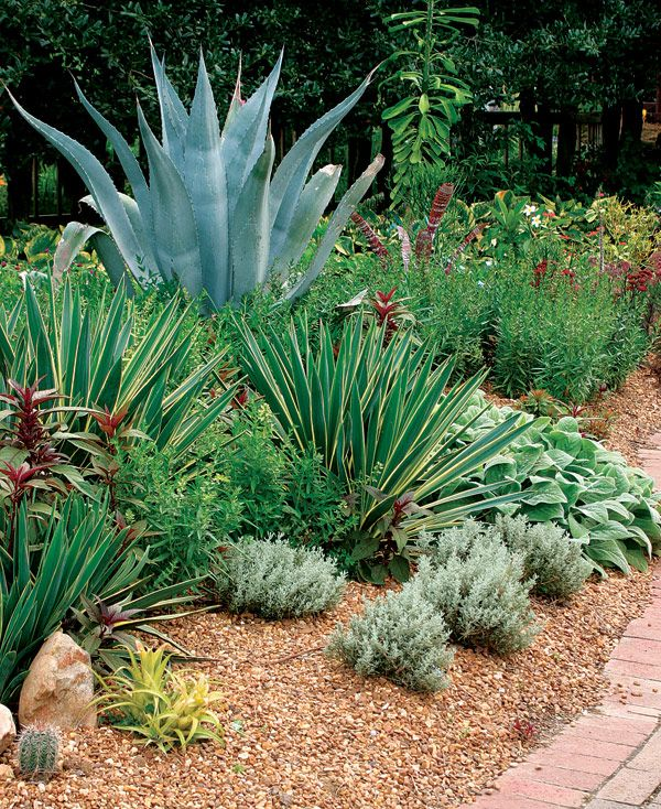 I love the spiky plants and maroon colors!   Plants like century plant (Agave americana, Zones 9–11) make the perfect centerpiece, especially when joined by a grouping of smaller spikes like variegated Spanish dagger (Yucca gloriosa 'Variegata', Zones 7–11).