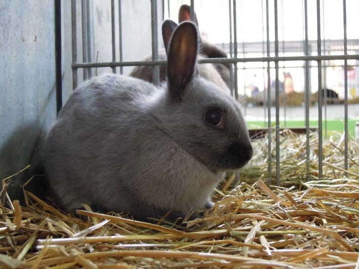 Litter Train a Rabbit Rabbit, Bunnies and Trains